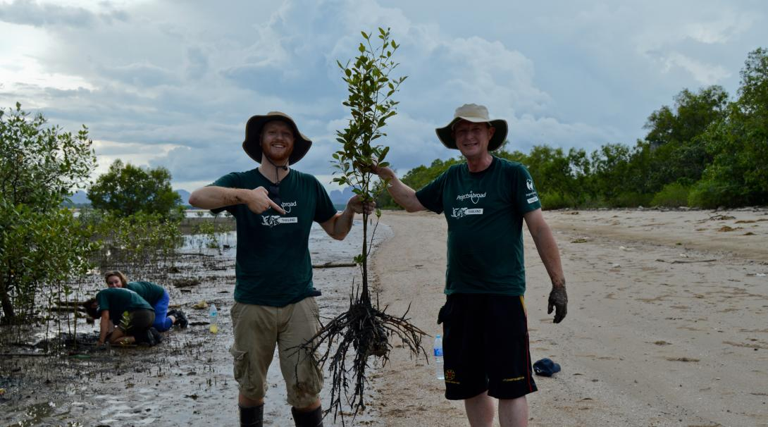 Conservation volunteers holding a full grown mangrove in Thailand
